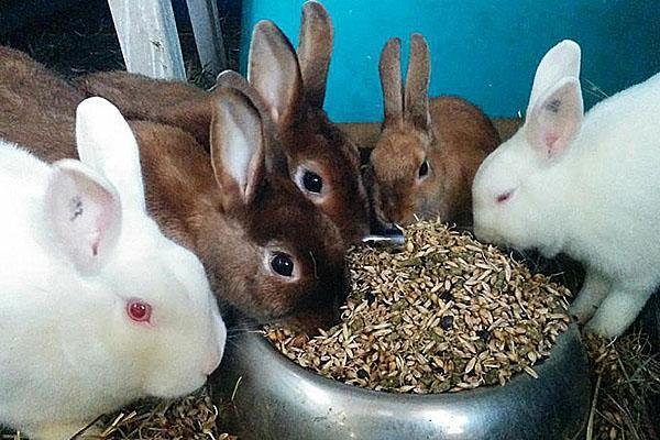 полноценный корм для кроликов