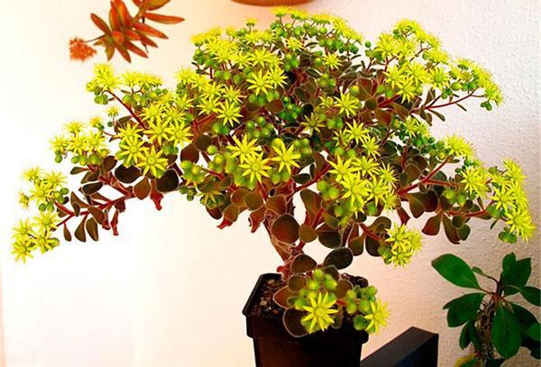 цветет дерево счастья