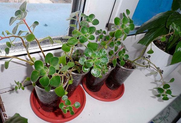 место размещения растения