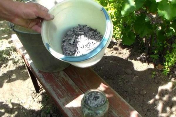 древесный уголь и зола обладают полезными свойствами