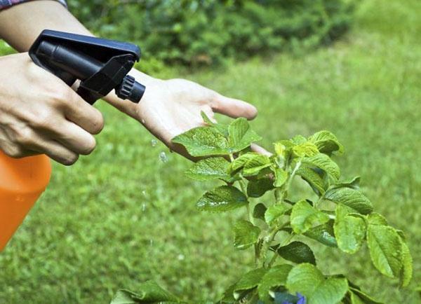 обработка растений против болезней