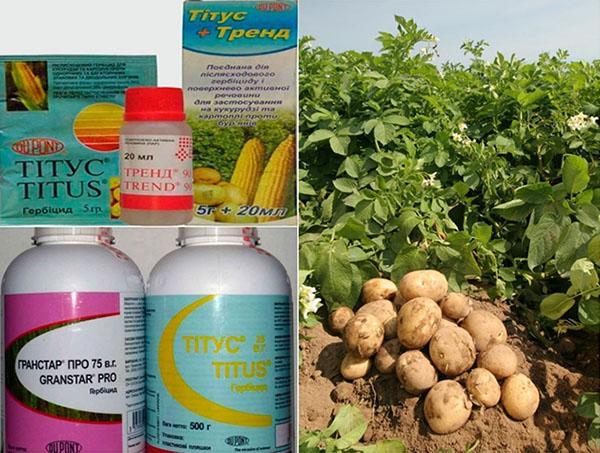 сохранения урожая