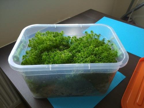 выращивание мха
