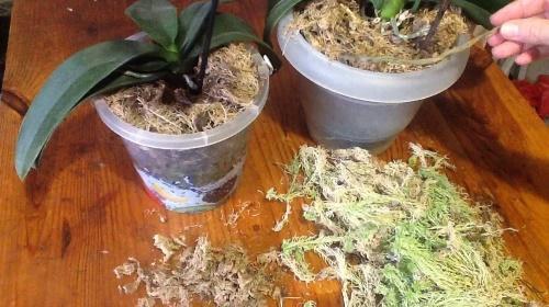 мох для орхидей