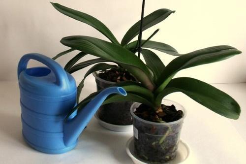 какой водой поливать орхидеи