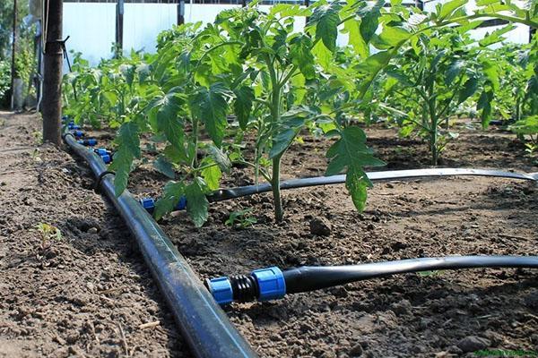 полив растений капельным методом