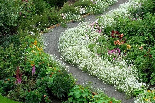 низкорослые бордюрные цветы