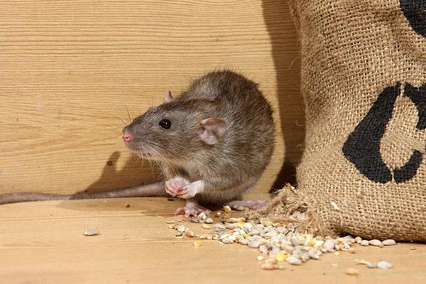 средства против мышей на даче