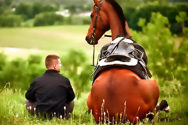 дружба между человеком и лошадью
