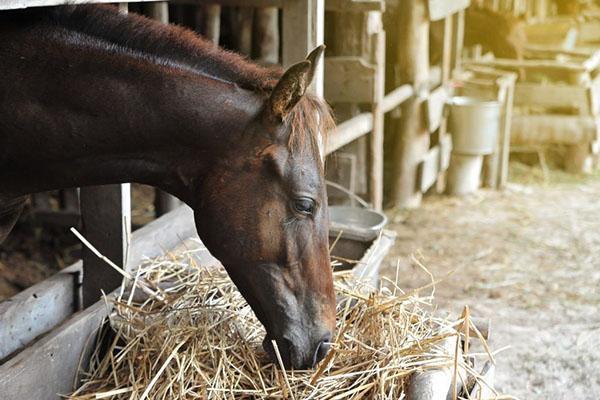 сено для лошади зимой