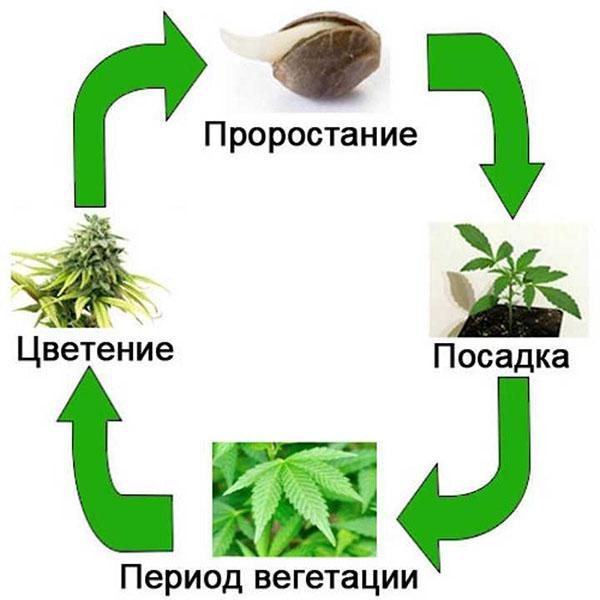 период вегетации растений