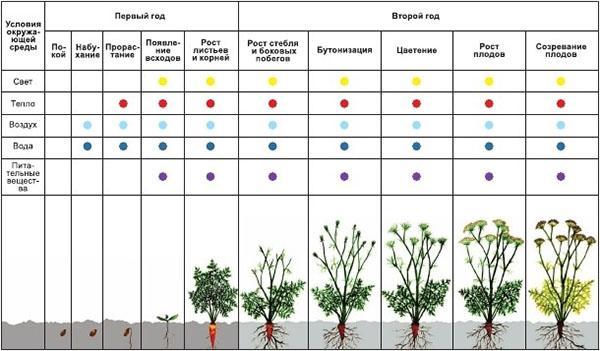 особенности развития растений
