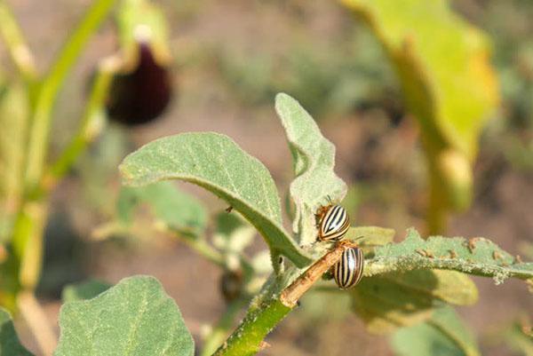 повреждение растений