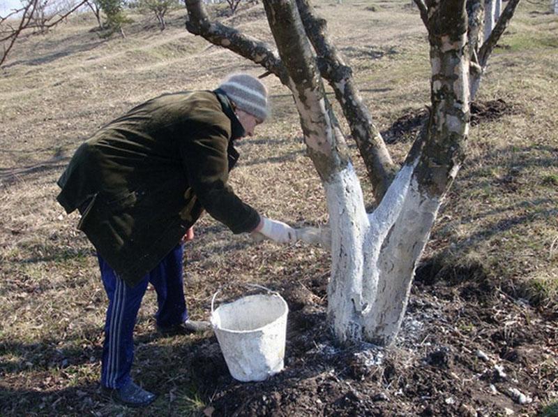 железный купорос применение в садоводстве осенью побелка