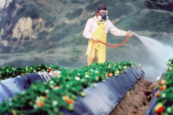 обработка клубники от сорняков