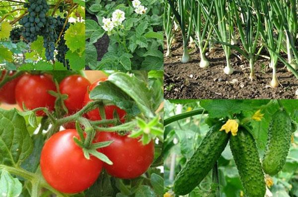 здоровые растения на даче