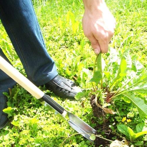 удаление сорняка лопаткой