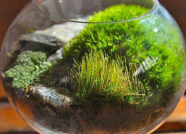 мох для террариума