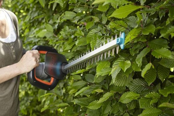 как выбрать садовые ножницы для большого участка