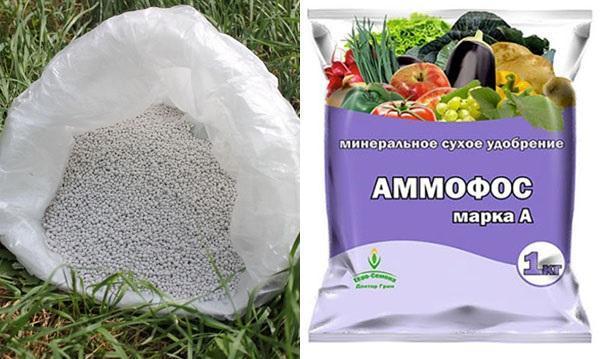 Инструкция по применению и состав удобрения Аммофос как его разводить