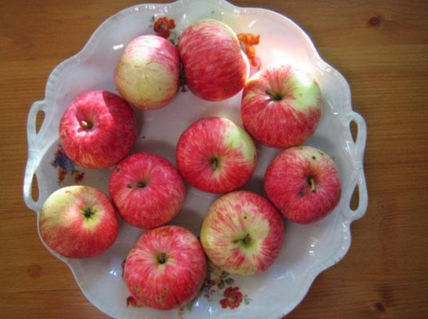 спелые плоды яблони сорта Грушовка Московская