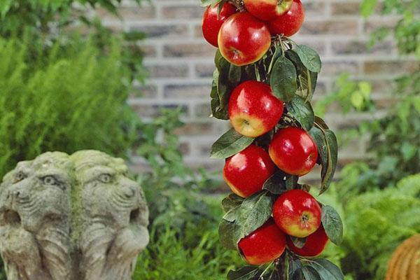 Колоновидные деревья в саду: виды и сорта, посадка и уход