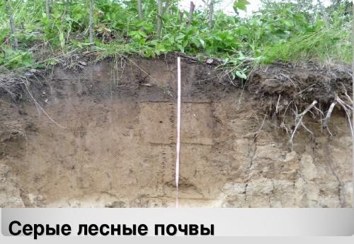 содержание гумуса в серых лесных почвах