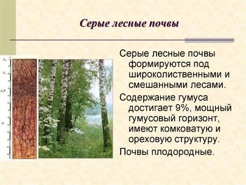 серые лесные почвы