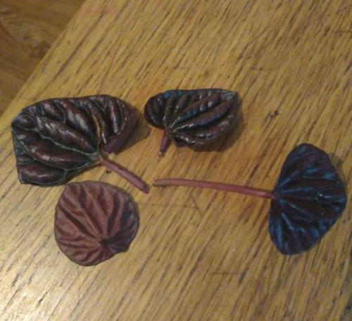 листовые черенки