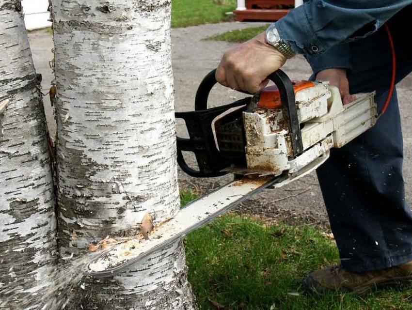 Дачники вырубают деревья
