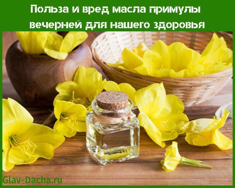 польза и вред масла примулы вечерней
