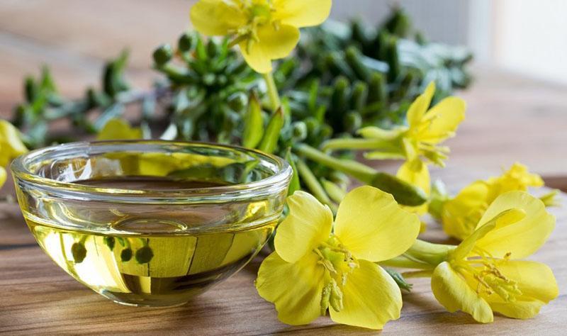 лечебные свойства масла примулы вечерней