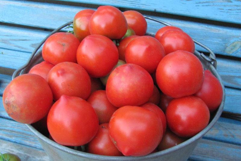 помидоры для засолки