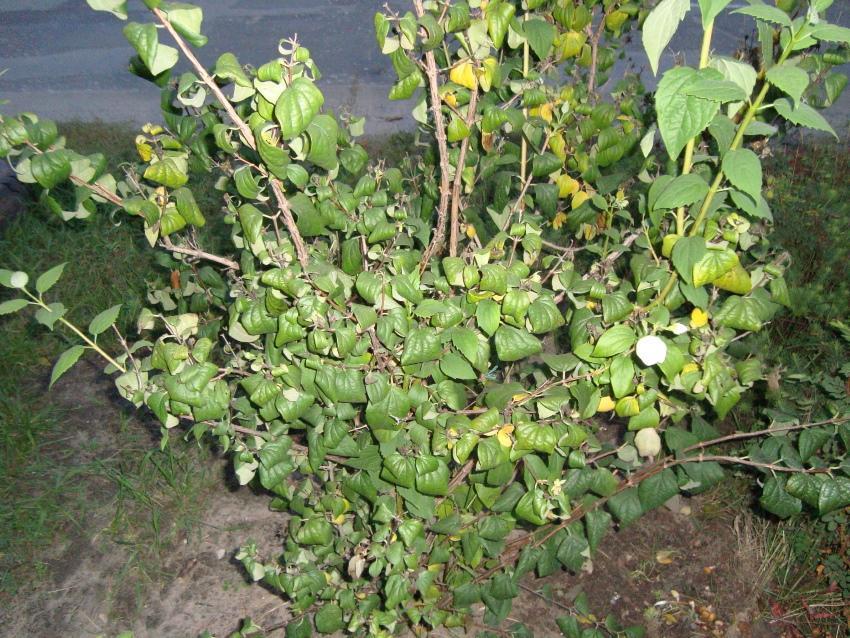 скрученная листва