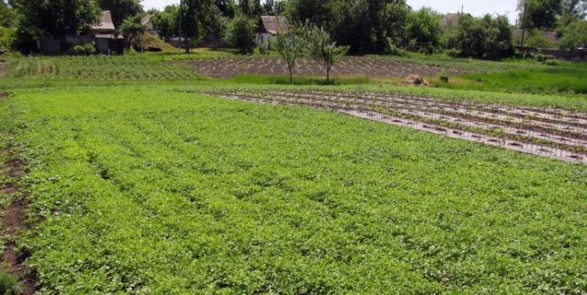 что такое сидераты для огорода
