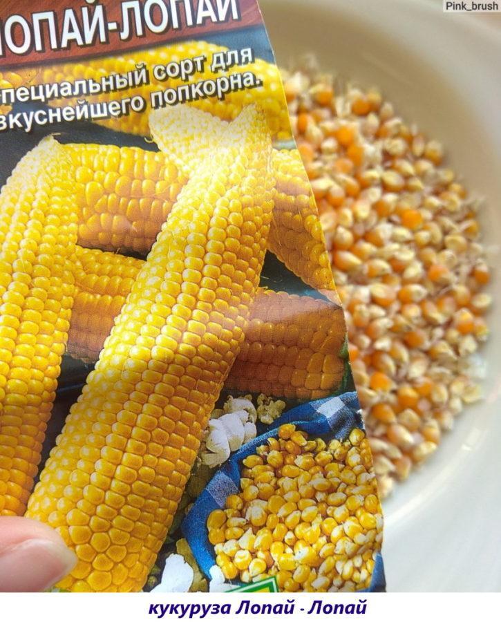 кукуруза лопай - лопай