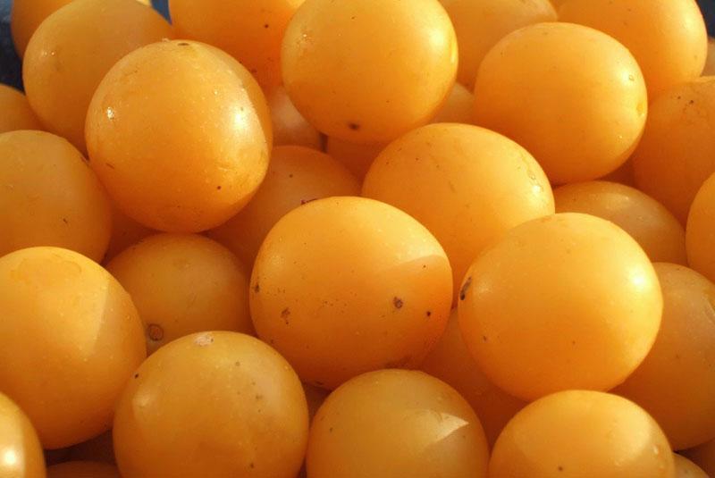 подготовить плоды алычи