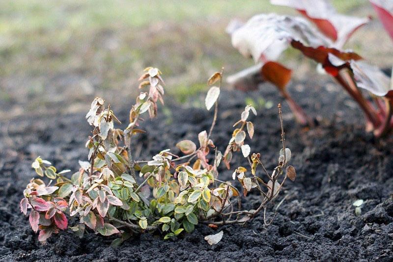 растению нужна помощь