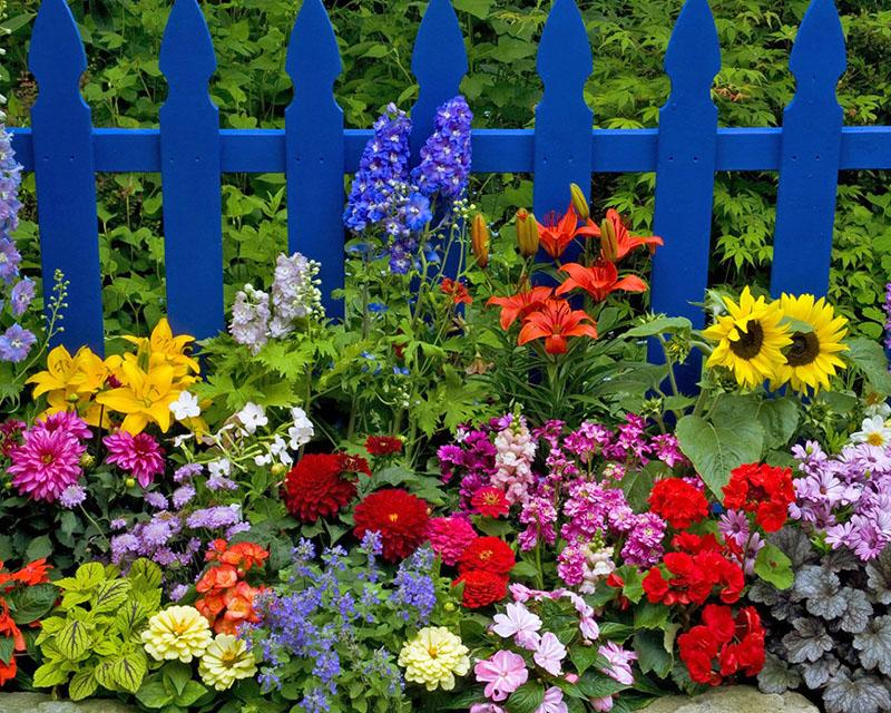 выращиваем самые разные цветы на даче