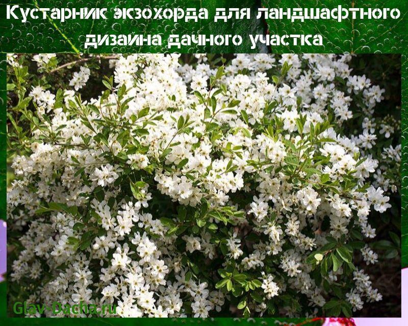 ekzokhorda-1a.jpg