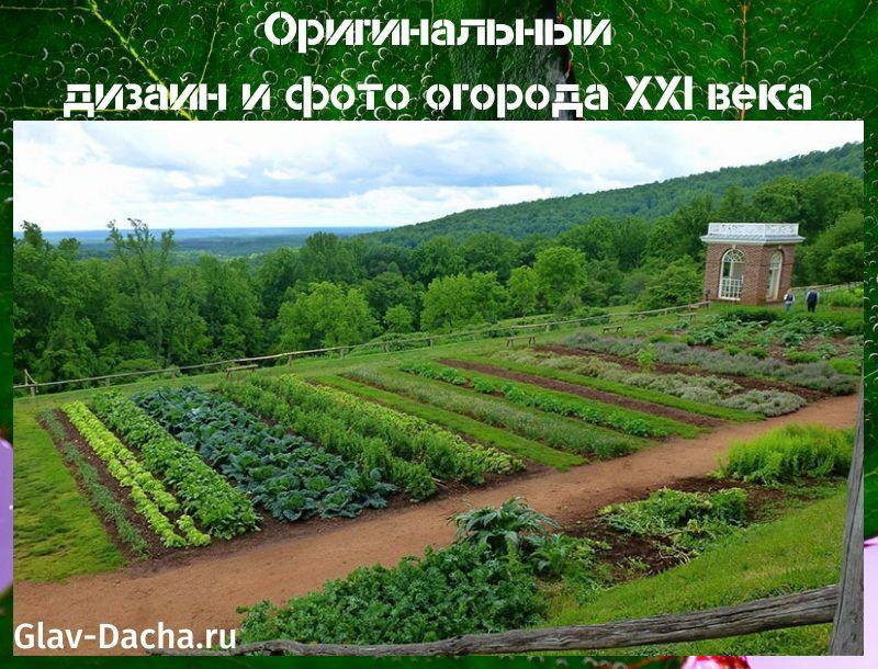 фото огорода