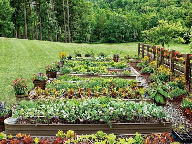 картинки огород с грядками научить