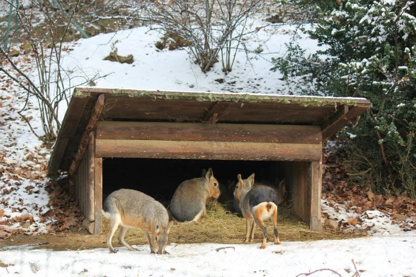 картинки на тему помощь животным зимой голос этот поёт