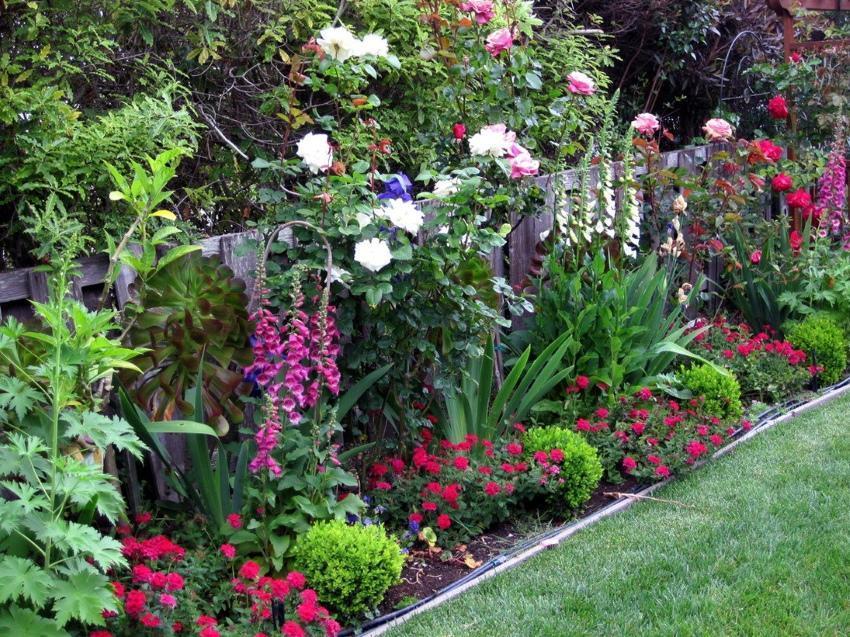как сочетать растения в саду