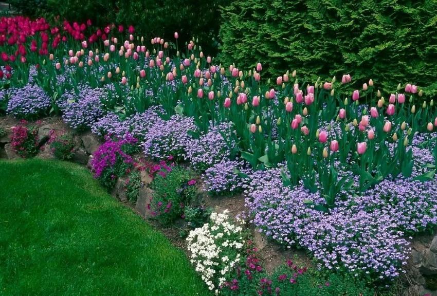 с чем сочетать тюльпаны