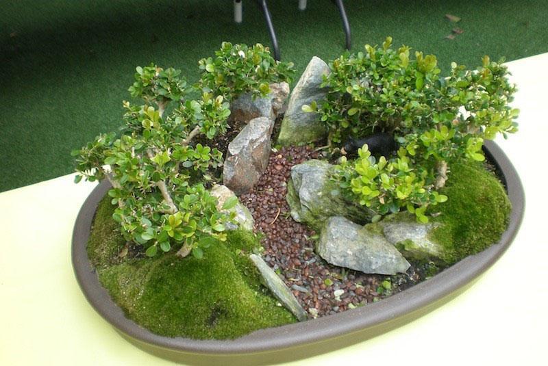 мох для мини сада