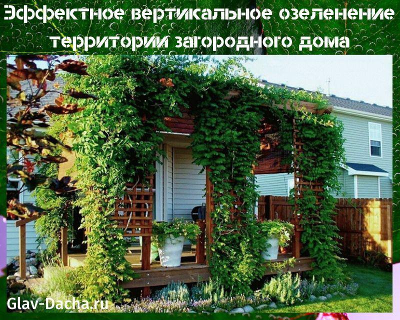 эффектное вертикальное озеленение