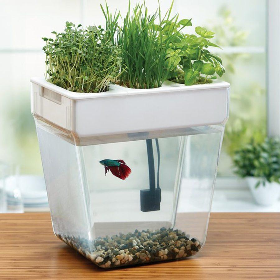 выращивание рыбы и салата
