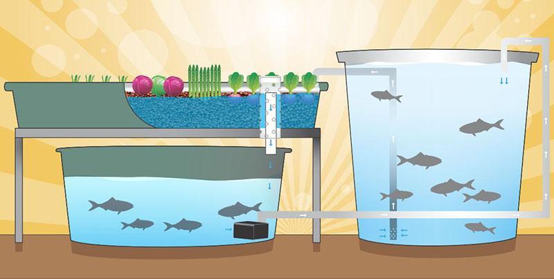 aquaponics option for home