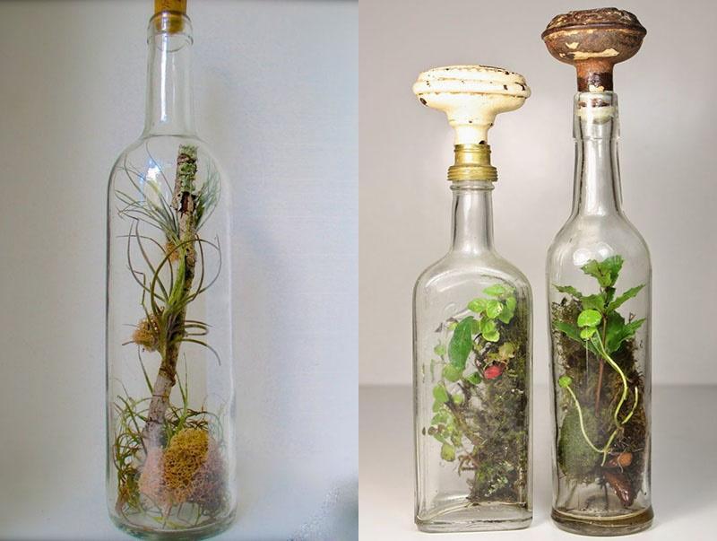 мини-сад в маленьких бутылках